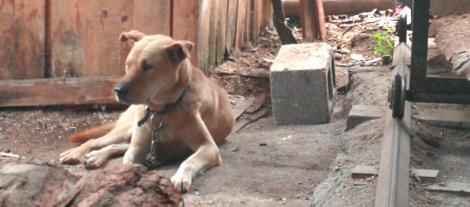 sawyer's dog Hubei, Jishou 2017